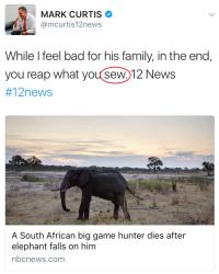 Curtis elephant